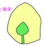 【中学受験】楽しい理科第1回 一問一答と解説 生物編①植物「種子と発芽」