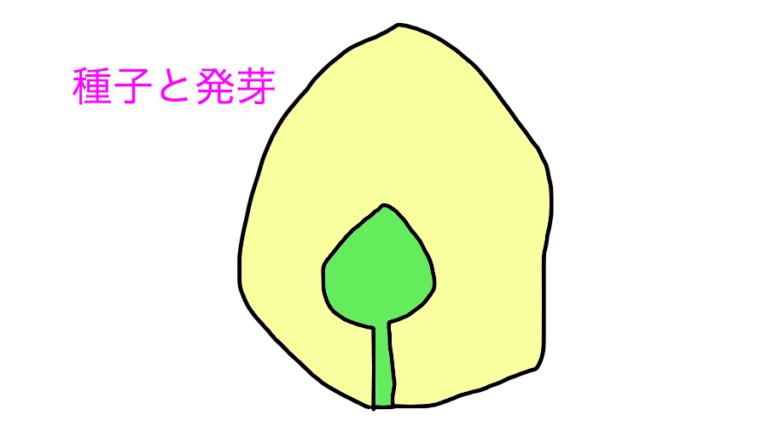 種子と発芽
