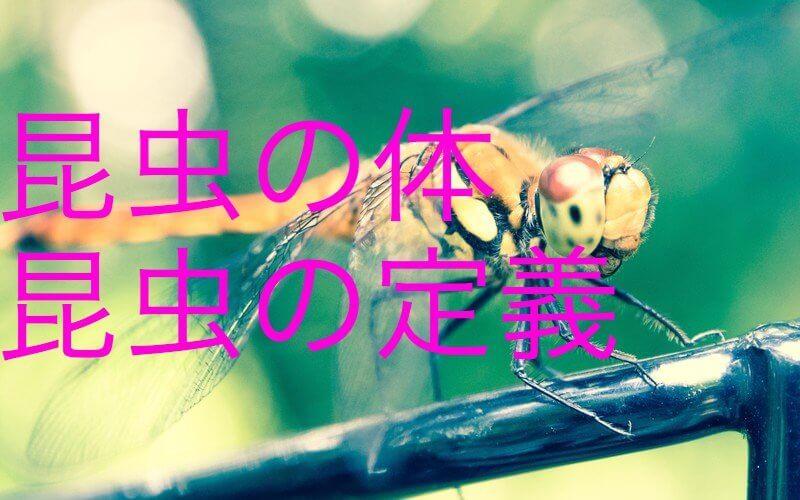 【中学受験】楽しい理科第7回 一問一答と解説 生物編②昆虫「昆虫の体・昆虫の定義」