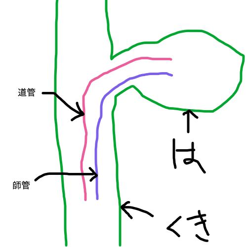 道管と師管