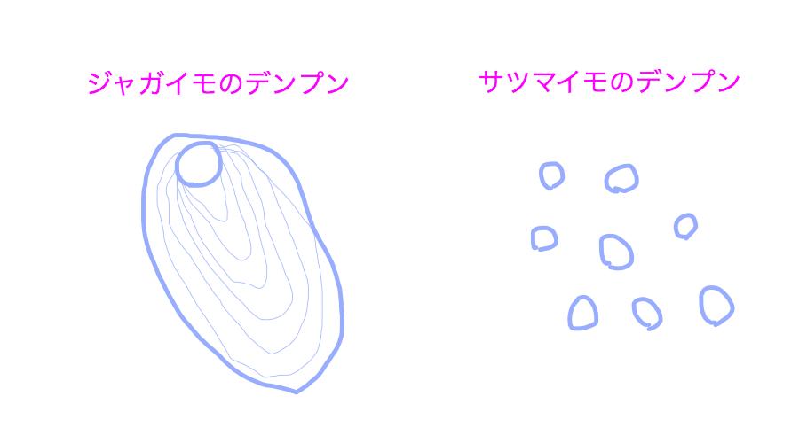 ジャガイモとサツマイモのデンプンの形