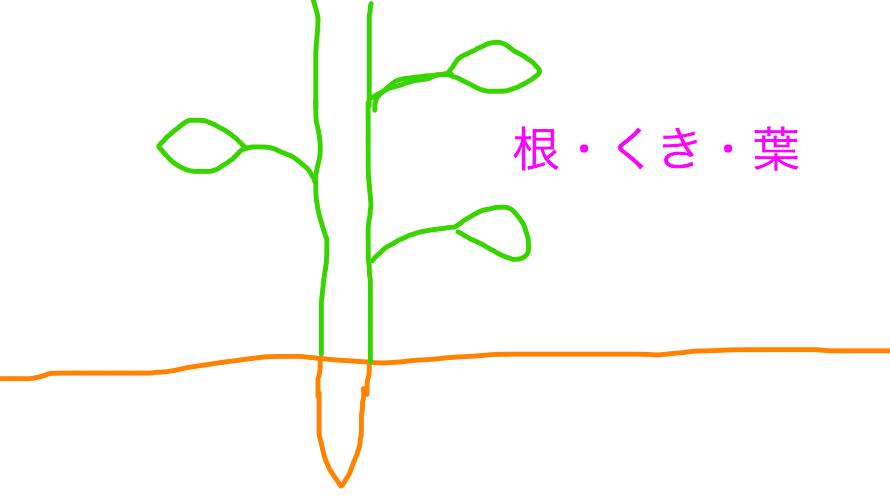 【中学受験】楽しい理科第4回 一問一答と解説 生物編①植物「根・くき・葉」