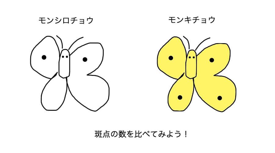 モンシロチョウとモンキチョウの斑点の数